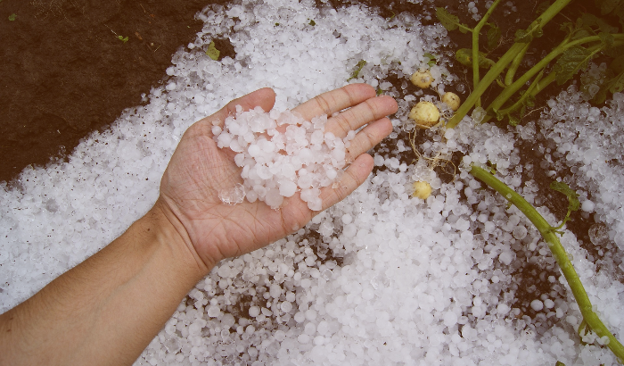 How to Deal with the Aftermath of Hail Damage