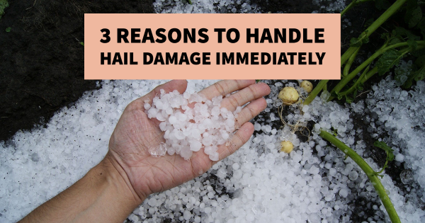 3 Reasons to Handle Hail Damage Immediately